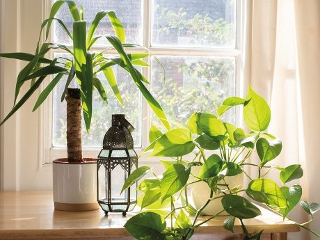 Indoor & Outdoor Plants